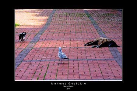 Mehmett (2)---